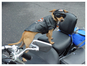 Authenticity - Harley Dog